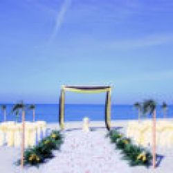 tropical breeze beach wedding package in yellow and black | florida sun weddings